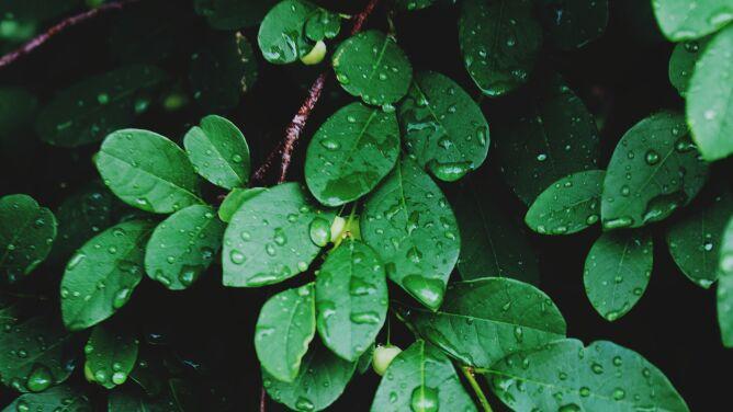 Pogoda na dziś: chłodno i deszczowo