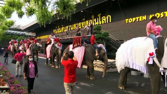 Tak w Tajlandii obchodzi się walentynki. Śluby na słoniach